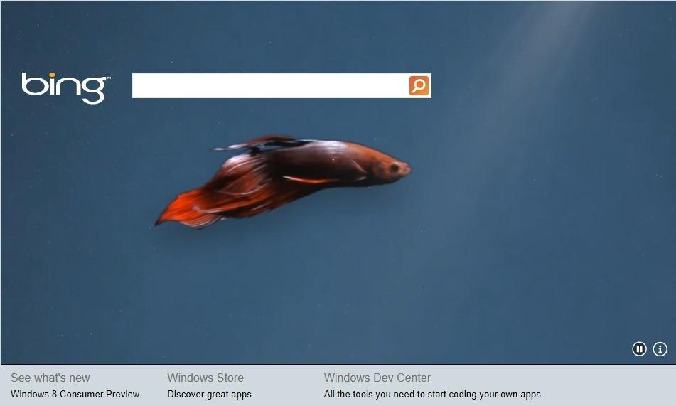 Bing me aplikacion për Windows 8