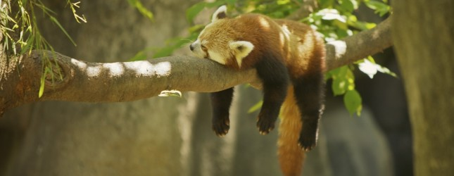 """Mozilla prezanton axhendën """"agresive"""" të sistemit më të ri operativ Firefox OS"""