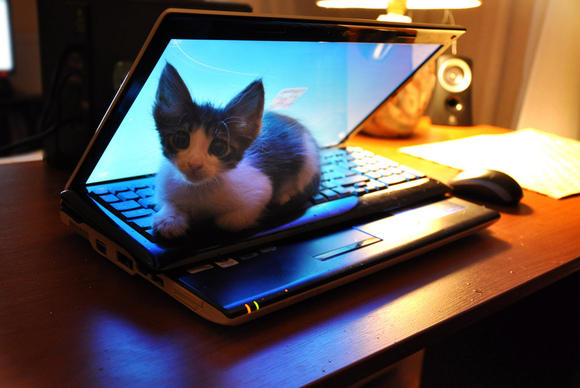 cat-on-a-laptop-100066762-gallery