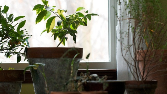 Router-i mund të dëmtojë lulet apo bimët që mbani në shtëpi