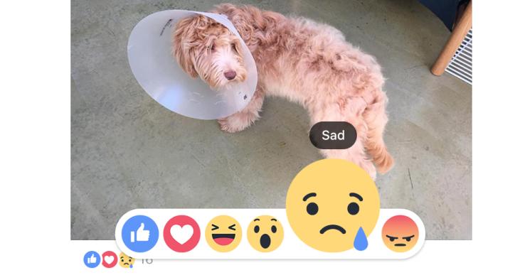 Reagimet në Facebook: Rrjeti social u jep jetë emocioneve të përdoruesve